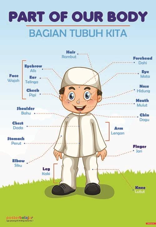 Poster Belajar Anggota Tubuh Tipe 04 Mainan Anak Edukatif