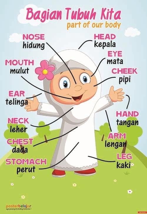 Poster Belajar Anggota Tubuh Tipe 05 Mainan Anak Edukatif